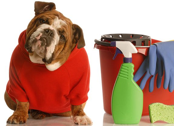 Poisonous Household Products for Pets
